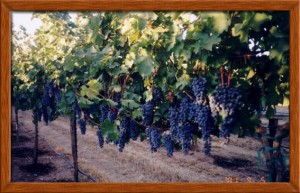 Harvest 2000